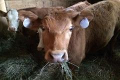 bug eyed beef